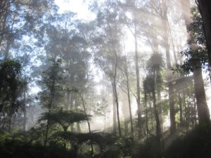 forest sunrise mist.jpg